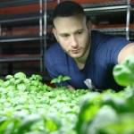 Conheça 1ª horta orgânica vegana, que não usa nenhum produto de origem animal no cultivo de vegetais