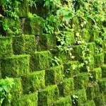 4 soluções da construção civil que prometem deixar sua casa mais sustentável