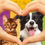 Nada de vender filhotes! Pet shop do interior de SP abriga animais para adoção