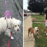 Abrigo convida pessoas a passear com animais abandonados enquanto jogam Pokémon GO