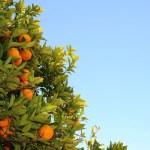 70% dos alimentos consumidos no mundo são cultivados por pequenos produtores rurais