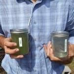 Sabe aquelas algas que ficam aos montes na praia? Startup recolhe todas e as transforma em plástico