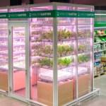 Supermercado planta (no meio do corredor) frutas, verduras e legumes que vende aos clientes