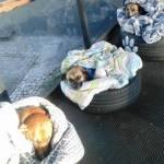 Conheça Max, Pitoco e Zoinho, três cães comunitários que ganharam camas quentinhas (e muito amor!) em um teminal de ônibus de Curitiba