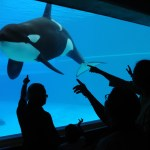 'Blackfish': o documentário que expõe a tortura de baleias em cativeiro no SeaWorld