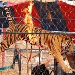 Itália proíbe uso de animais em apresentações de circo