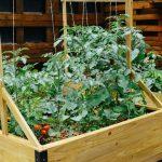 Conheça a horta orgânica e coletiva que fica no meio da cidade e é aberta ao público 24h por dia