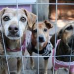 Belo Horizonte quer proibir venda de animais em pet shops, feiras, parques e clínicas veterinárias