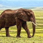 Finalmente! China proíbe comércio de marfim em todo o território nacional