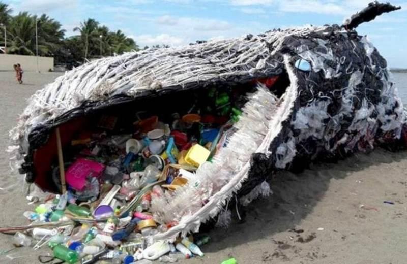 Baleia ameaçada de extinção é encontrada morta com 29