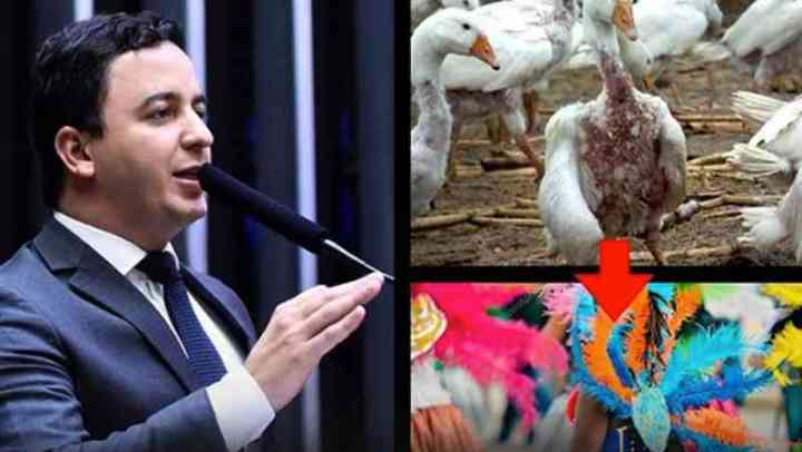 Projeto de lei visa proibir uso de penas e plumas de animais para fantasias de Carnaval