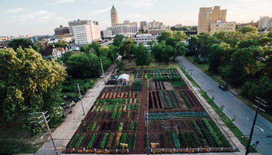 1º centro comunitário agrícola das Américas oferece alimentos gratuitos para milhares de pessoas