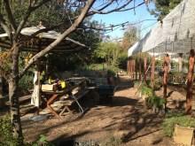 Kolla already has an adorable backyard.