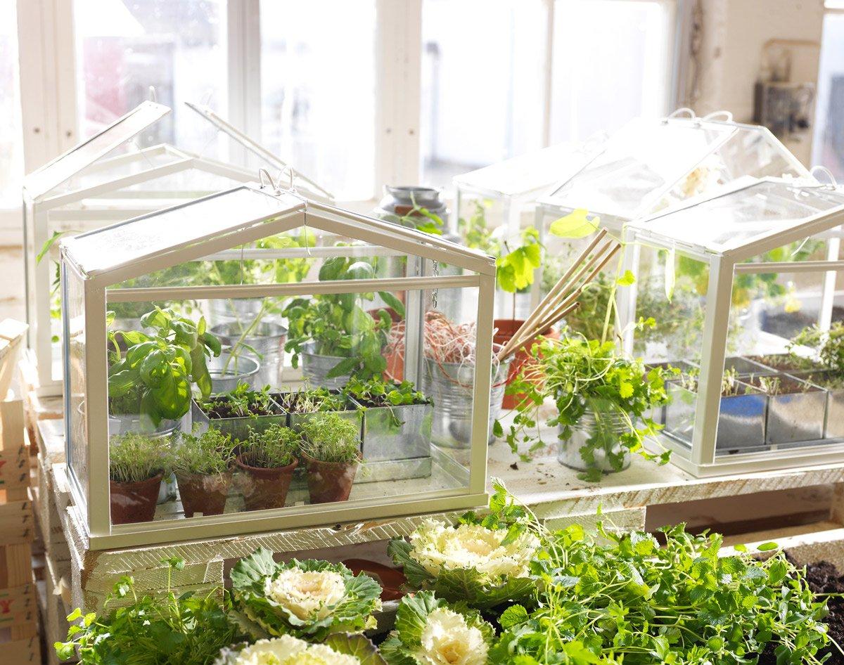 Indoor Miniature Greenhouse