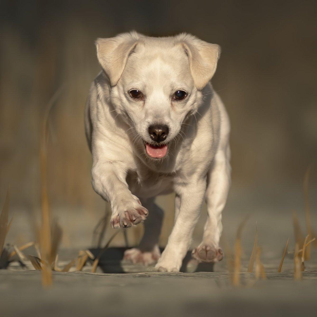 huisdierenfotografie honden