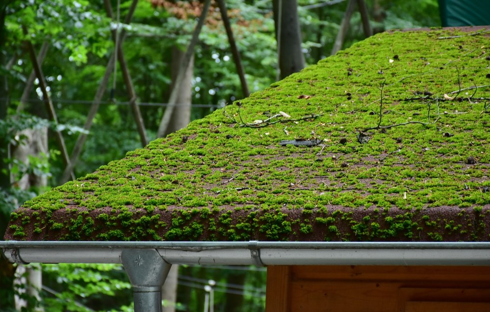 renovation green roof