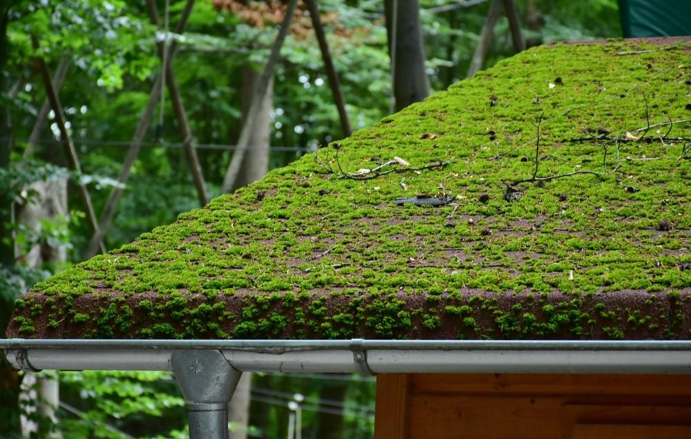 renovation green roof