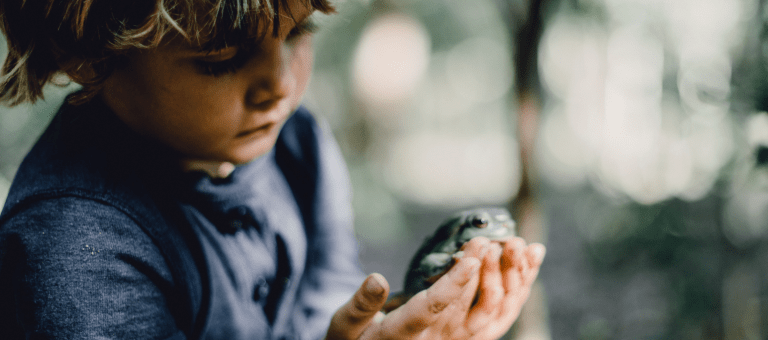 Photo of a boy holding a frog