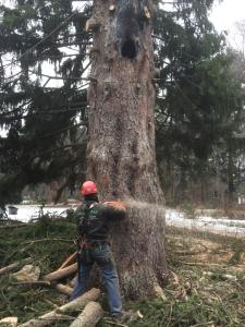 Tree Removal Waukesha, Tree Removal, Milwaukee, Waukesha, tree removal