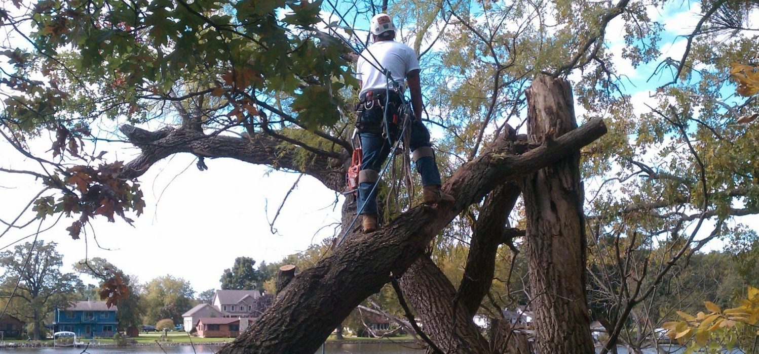 Tree Removal, tree care, tree services, waukesha