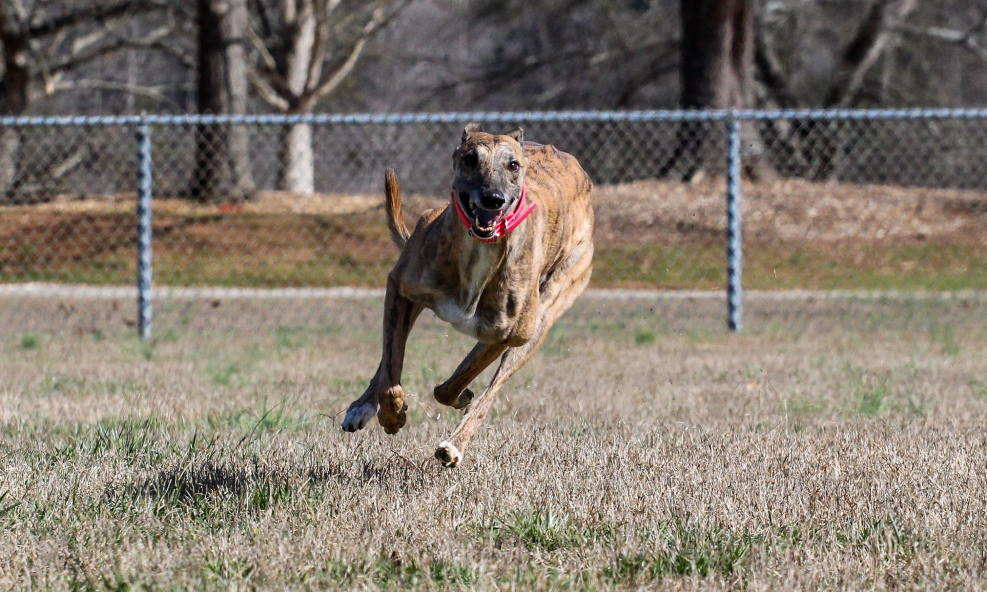 By Now You Have Probably Noticed There Are A Lot Of Pictures Of My Dogs  Running And Playing Without Leashes I Want To Make It Clear That Generally  Speaking