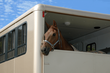 Taking a horse to a show