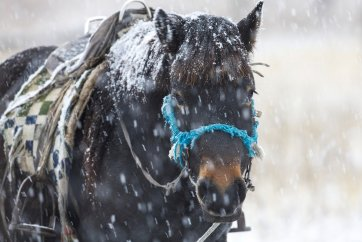 Keep warm working with horses out in the snow