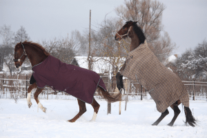 The Grooms List - Rugging horses in winter - Caroline Carter Recruitment Ltd