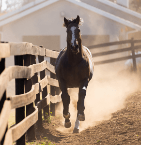 Horse Characters - The Escape Artist