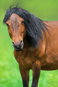 Horse Characters - The Grumpy One