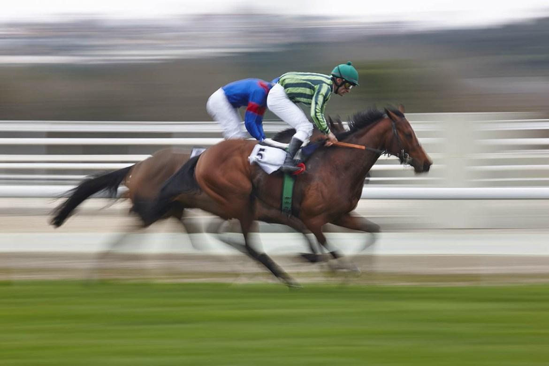 Equine Disciplines - Racing