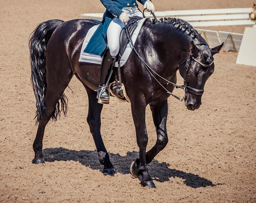 Equine Disciplines - Dressage