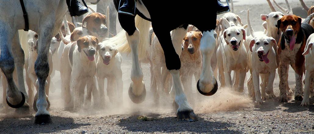 Equine Disciplines - Hunting