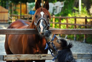 Equine Disciplines - Family Yard