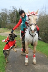 Tips for Grooms Working with Horses at Christmas - Photo Credit Tina Johnson