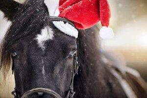 Tips for Grooms Working with Horses at Christmas - Taking photos of the horses at Christmas