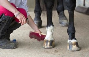 Equine Apprenticeships - Invaluable Education or Slave Labour - Equine Careers