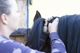 Freelance Grooms and Freelance Groom Jobs - Offering plaiting and clipping Services