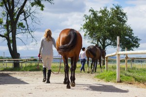 How to recruit an everyday Super Groom in 2018 - getting your job vacancy advert right