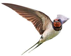 Spring Forward in the Equine Industry - Swallows Arrive
