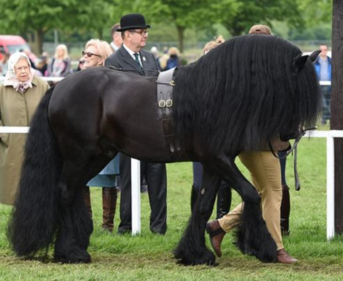 The ultimate guide to the Royal Windsor Horse Show - In-Hand Showing