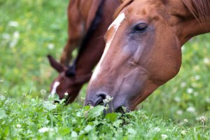 Are you ready to be a Sole Charge Groom - Pasture Management