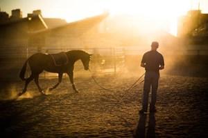Equine Apprenticeships - Course Options - Non Riding Apprentices