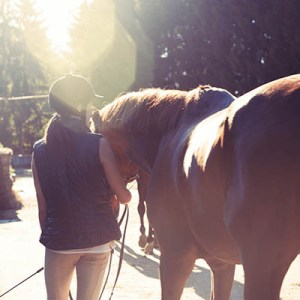 Equine Apprenticeships - Course Options - Traineeships for complete beginners