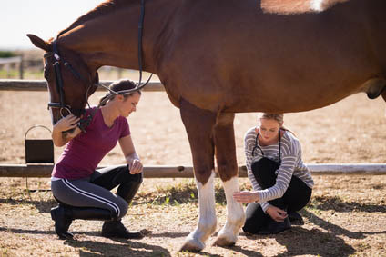 What are Dressage Grooms and Dressage Groom Jobs - knowledgeable