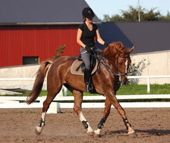 Become a Professional Rider - experience