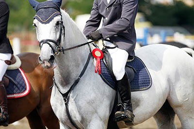 Become a Professional Rider - success