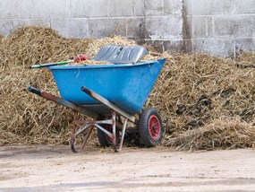 Become a Professional Rider - you haven't escaped yard duties yet!