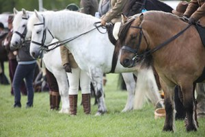 County Shows explained - be well prepared