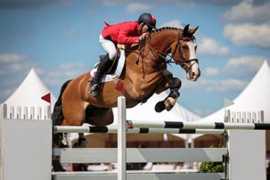County Shows explained - equine classes
